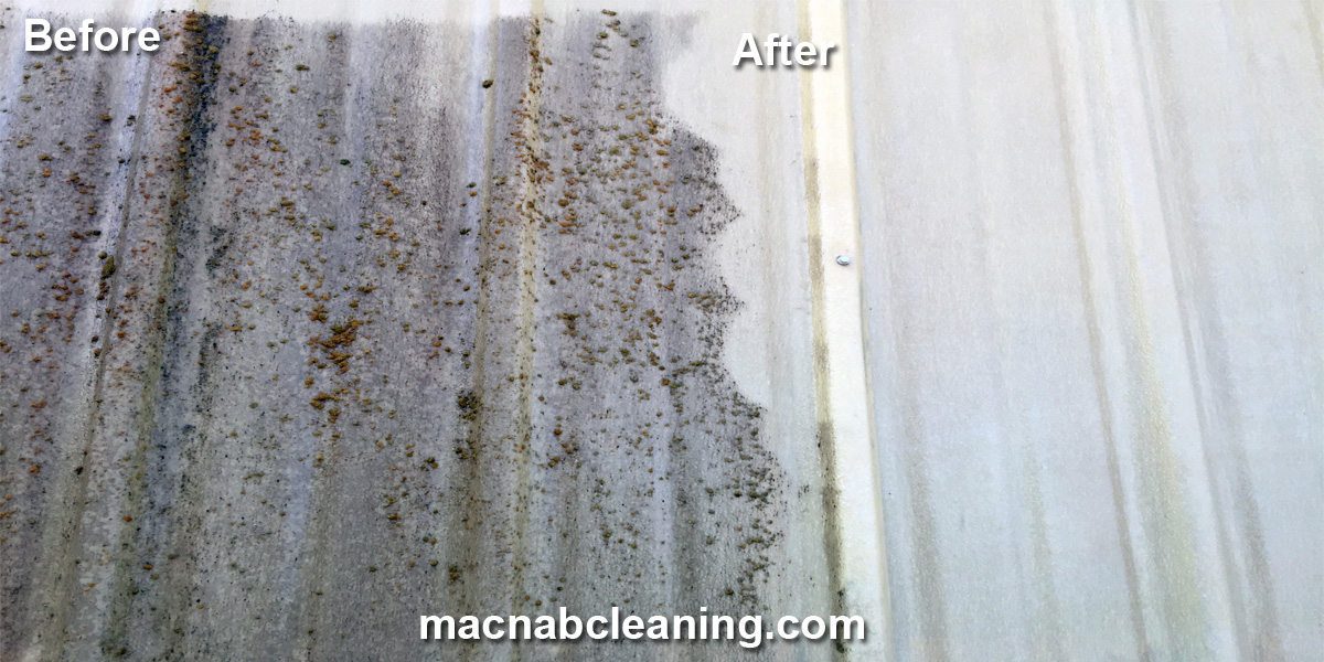 Exterior siding moss mold removal before and after macnab cleaning