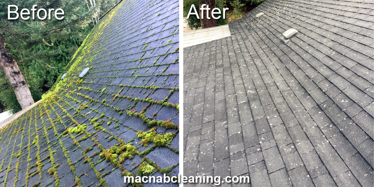 Roof Cleaning and Treatment
